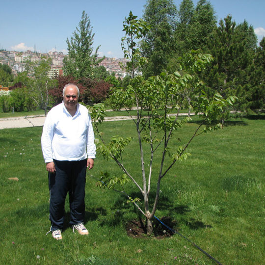 TRT bahçesine diktiğim Kaman cevizi